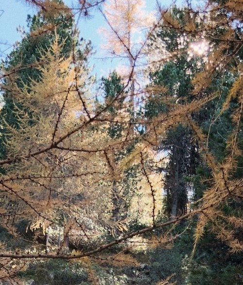 Header Wald