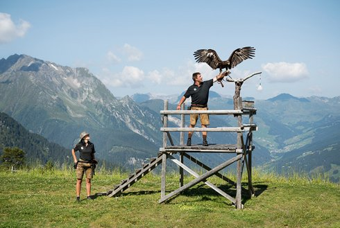 Adlershow am Ahorn mit Zillertaler Bergekulisse