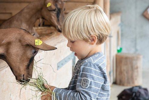 Kind füttert Ziege
