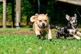 Hundetraining, Hundebetreuung