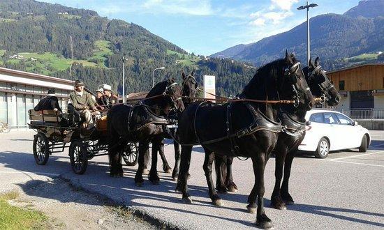 Pferdekutschenfahrt Sommer